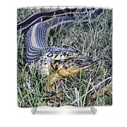 Snake With Legs Shower Curtain
