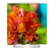 Snapdragon Flower Blurred Background Shower Curtain