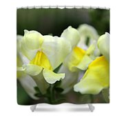 Snapdragons Group Of Yellow Cream Shower Curtain