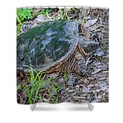 Snapper Eggs Shower Curtain