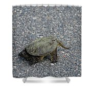 Snapping Turtle 3 Shower Curtain