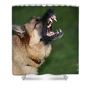 Snarling German Shepherd Dog Shower Curtain