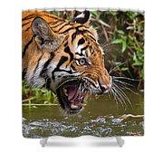 Snarling Tiger Shower Curtain