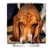 Sniffer Shower Curtain