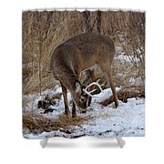 Sniffing Stag Shower Curtain