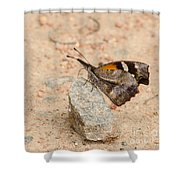 Snout Butterfly  Shower Curtain
