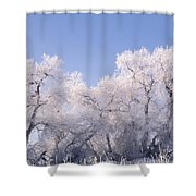 Snow And Ice Blanket Cottonwood Trees Shower Curtain