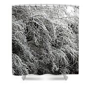 Snow And Ice Covered Trees At The Base Of Niagara Falls Shower Curtain