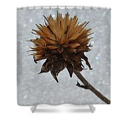 Snow And Thistles Shower Curtain