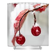 Snow Berries Shower Curtain by Aaron Aldrich