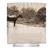 Snow Bound Horse Shower Curtain