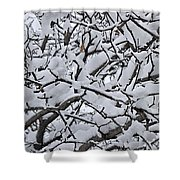 Snow Branches 2-1-15 Shower Curtain