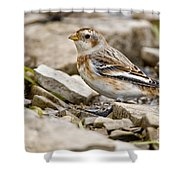 Snow Bunting Pictures 43 Shower Curtain