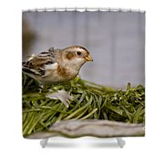 Snow Bunting Pictures 87 Shower Curtain