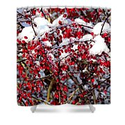 Snow Capped Berries Shower Curtain
