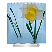Snow-capped Daffodil On May 21 Near Des Chutes National Forest-or  Shower Curtain