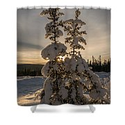 Snow Capped Sitka Spruce Shower Curtain