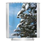 Snow-clad Pine Shower Curtain