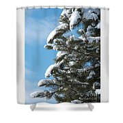 Snow-clad Pine Shower Curtain