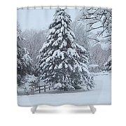 Snow Conifer 2-1-15 Shower Curtain