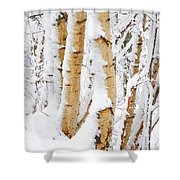 Snow Covered Birch Trees Shower Curtain by John Kelly