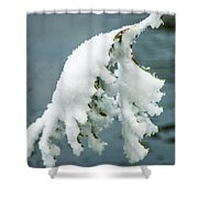 Snow Covered Pine Tree Branch Shower Curtain