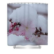 Snow Covered Pink Cherry Blossoms Shower Curtain