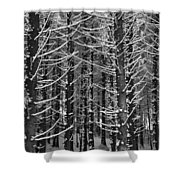 Snow Covered Trees Shower Curtain