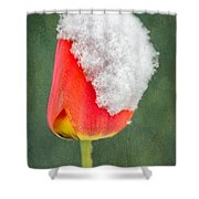 Snow Covered Tulip Shower Curtain