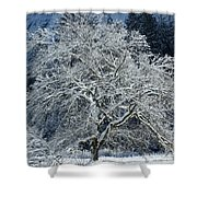 Snow Covered Winter Shower Curtain