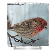 Snow Day Housefinch With Texture Shower Curtain