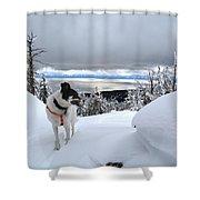 Snow Dog Shower Curtain