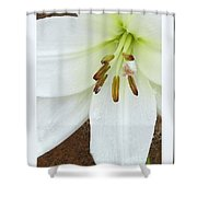 Snow Drops Shower Curtain