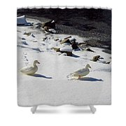 Snow Ducks Shower Curtain