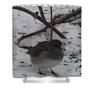 Snow Finch Shower Curtain