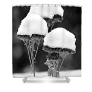 Snow Flowers Bw Shower Curtain