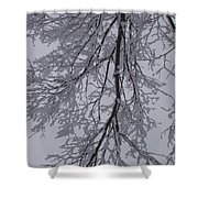 Snow Frosted Branches Shower Curtain