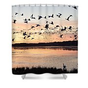 Snow Geese At Chincoteague Last Flight Of The Day Shower Curtain