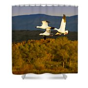Snow Geese Flying In Fall Shower Curtain