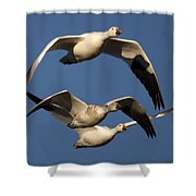 Snow Geese Flying Shower Curtain