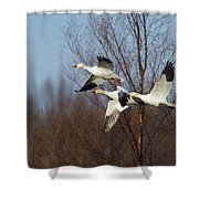Snow Geese In Flight Shower Curtain