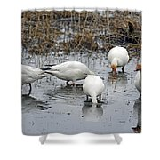 Snow Geese Muddy Waters Shower Curtain
