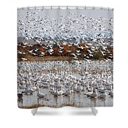 Snow Geese No.4 Shower Curtain