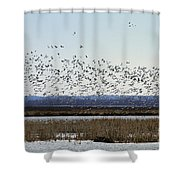 Snow Geese Taking Off At  Loess Bluffs National Wildlife Refuge Shower Curtain