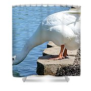 Snow Goose 2 Shower Curtain