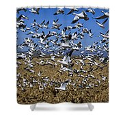 Snow Goose Flock Taking Off Shower Curtain