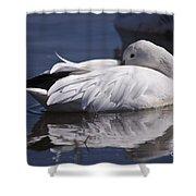Snow Goose Shower Curtain