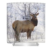 Snow In The Face  Shower Curtain