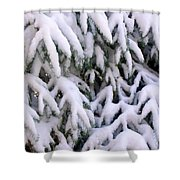 Snow Laden Branches Shower Curtain