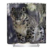 Snow Leopard 1 Shower Curtain